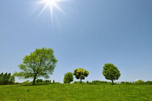 五月晴れと新緑の木立の写真素材 [FYI00469913]