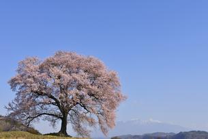 わに塚のエドヒガンザクラと残雪の八ヶ岳の写真素材 [FYI00469986]