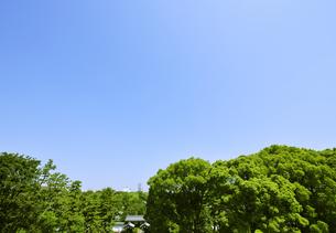 新緑の皇居東御苑と日本武道館の写真素材 [FYI00470045]