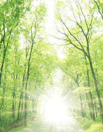 道と新緑の雑木林の写真素材 [FYI00470071]