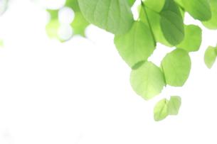 新緑の葉と木漏れ日の写真素材 [FYI00470176]