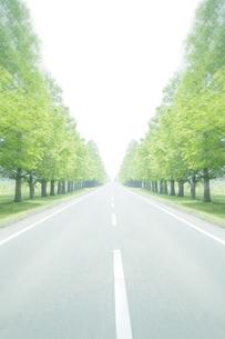 新緑の並木と真っ直ぐに伸びた道の写真素材 [FYI00470189]