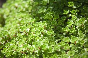 濃い緑色の植物の素材 [FYI00470256]