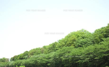 青い空と緑木の素材 [FYI00470263]