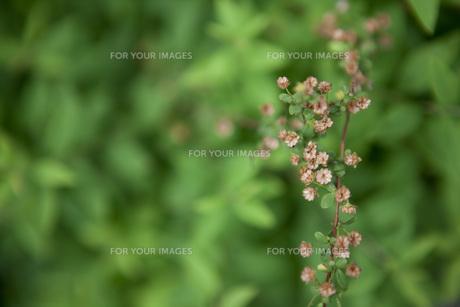 小さな花が咲く植物の素材 [FYI00470270]