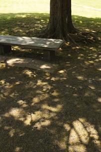 木漏れ陽とベンチの素材 [FYI00470275]