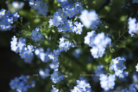 木漏れ日が当たっている花の素材 [FYI00470276]