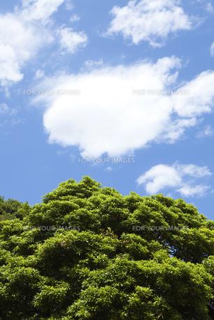 青い空と雲と木の素材 [FYI00470291]