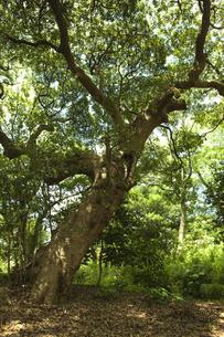 森林の素材 [FYI00470292]