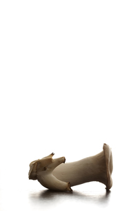まな板の上のエリンギの素材 [FYI00470305]