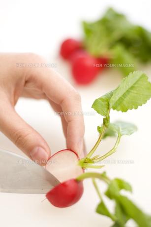 ラディッシュを切る女性の手元の写真素材 [FYI00470320]