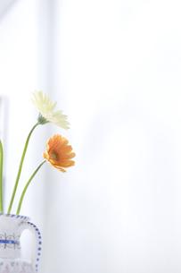 花瓶に生けたガーベラの素材 [FYI00470336]