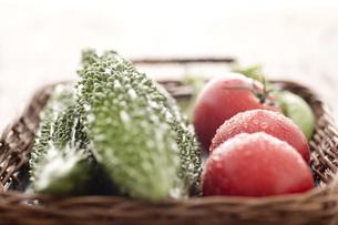 水滴のついたトマト、ゴーヤの素材 [FYI00470459]