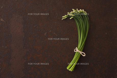 錆びたブリキ板の上の花ニラの写真素材 [FYI00470487]