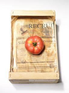 ダンボールの中のトマトの写真素材 [FYI00470634]