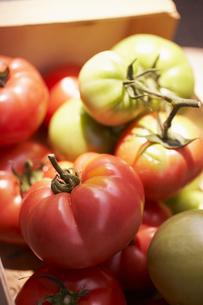 日光を浴びるトマトの素材 [FYI00470639]