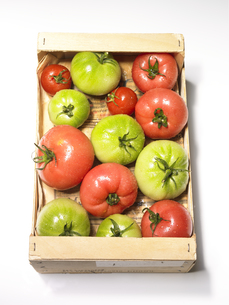 ダンボールの中のトマトの素材 [FYI00470643]