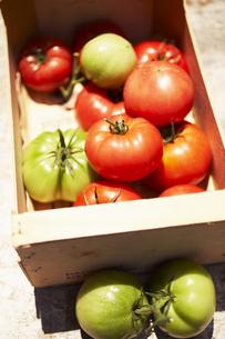 木箱の中のトマトの素材 [FYI00470654]