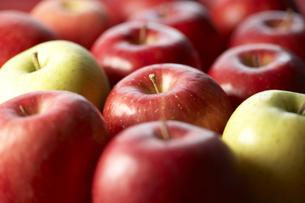 並べたりんごの素材 [FYI00470764]