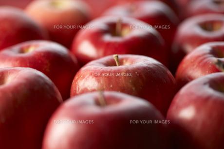 並べたりんごの素材 [FYI00470765]
