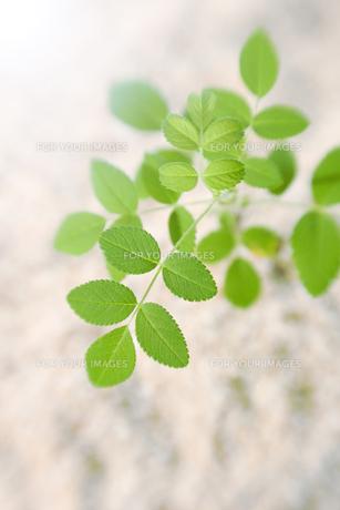 砂の上の緑の写真素材 [FYI00471029]