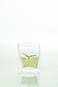 ガラス瓶に入った緑の双葉の写真素材 [FYI00471030]