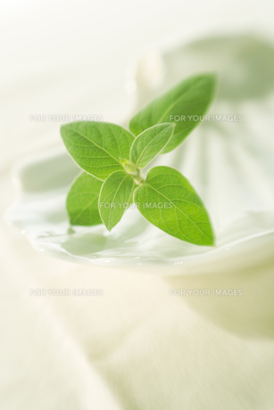 白いテーブルクロスと緑の葉の写真素材 [FYI00471040]