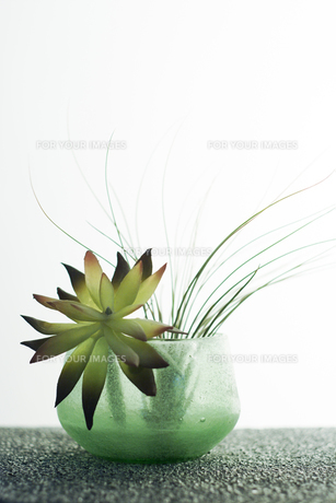 ガラスの器に活けた花の素材 [FYI00471056]