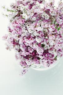スターチスの花束の写真素材 [FYI00471057]