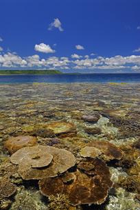珊瑚礁の海の写真素材 [FYI00471084]