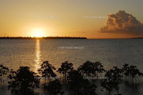 マングローブと夕日の写真素材 [FYI00471086]