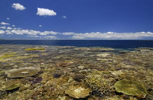 珊瑚礁の海の写真素材 [FYI00471104]