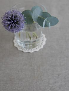 エリンジウムの花の写真素材 [FYI00471197]