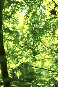 新緑の写真素材 [FYI00471209]
