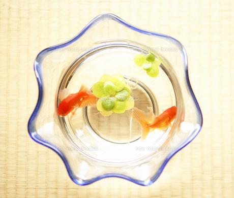 金魚鉢の写真素材 [FYI00471461]