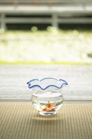 金魚鉢の写真素材 [FYI00471467]
