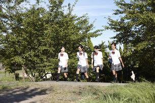 木の茂る小道を仲良く楽しそうに歩く女子高生四人の写真素材 [FYI00471681]