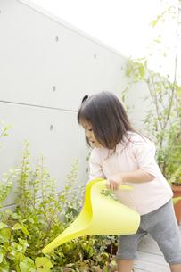 庭の草花に水やりをする女の子の写真素材 [FYI00471984]