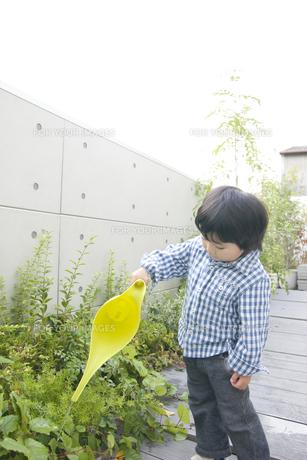 庭の草花に水やりをする男の子の写真素材 [FYI00471988]