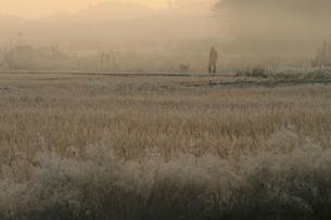 霜のたんぼの写真素材 [FYI00472138]