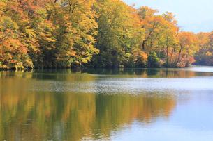秋の鎌池の写真素材 [FYI00472368]