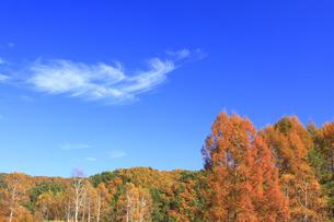 秋の木と空の写真素材 [FYI00472369]