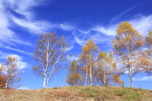 秋の木と空の写真素材 [FYI00472383]