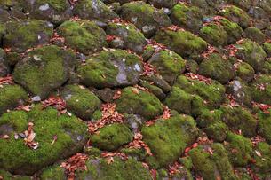 石垣と落ち葉の写真素材 [FYI00472384]