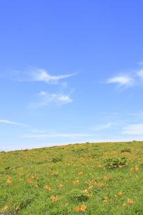 霧ヶ峰高原のニッコウキスゲの写真素材 [FYI00472411]