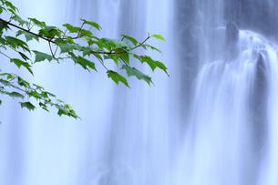 善五郎の滝の写真素材 [FYI00472412]