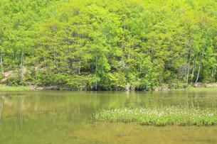 新緑と池の写真素材 [FYI00472415]