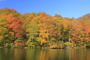 秋の鎌池の写真素材 [FYI00472424]