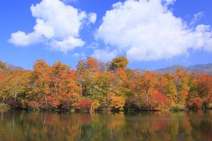 秋の鎌池の写真素材 [FYI00472425]