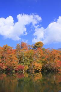 秋の鎌池の写真素材 [FYI00472426]